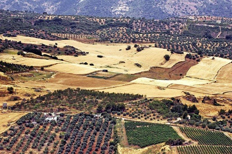 Patchwork fields, beyond Ronda