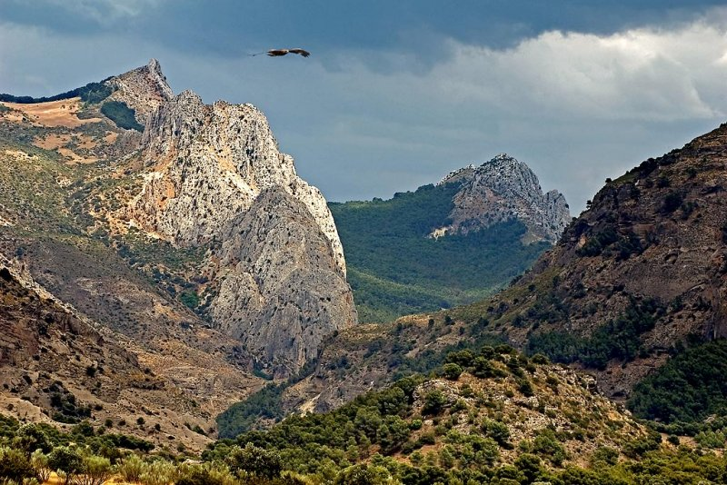 Mountains and eagle, near El Chorro