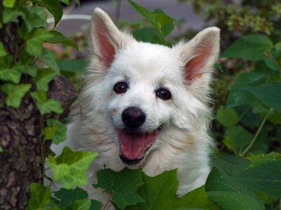 In memory of Tilki, enjoying her garden