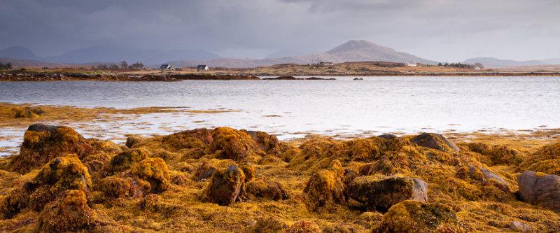 Connemara - Yellow Seaweed