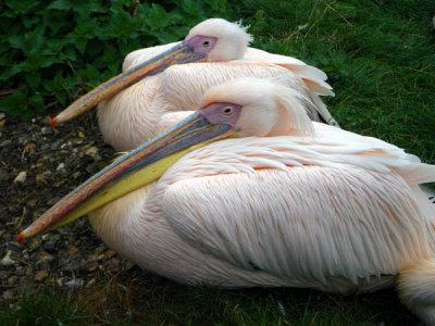 Awaken Birds