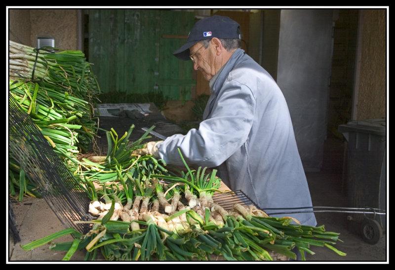 Los abuelos cocineros de calçots  -  Elder cooking onions