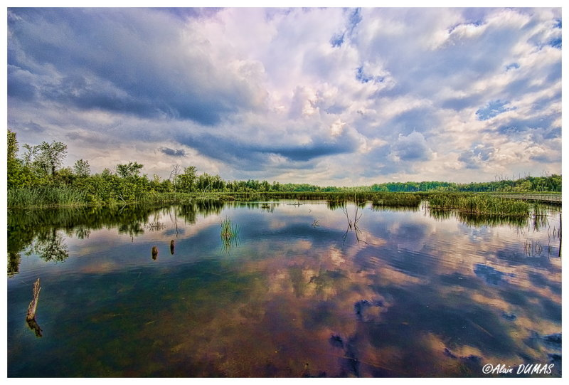 Marais de lIle Bizard- Marsh