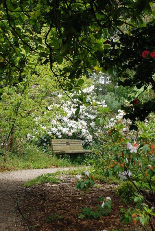 San Francisco Botanical Garden Path and Bench