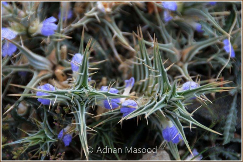 Spring_110401.jpg