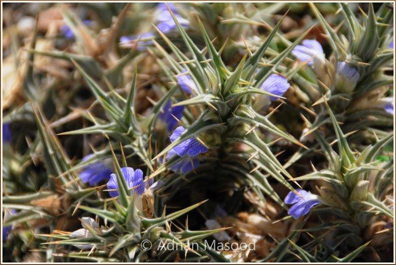 Spring_110402.jpg
