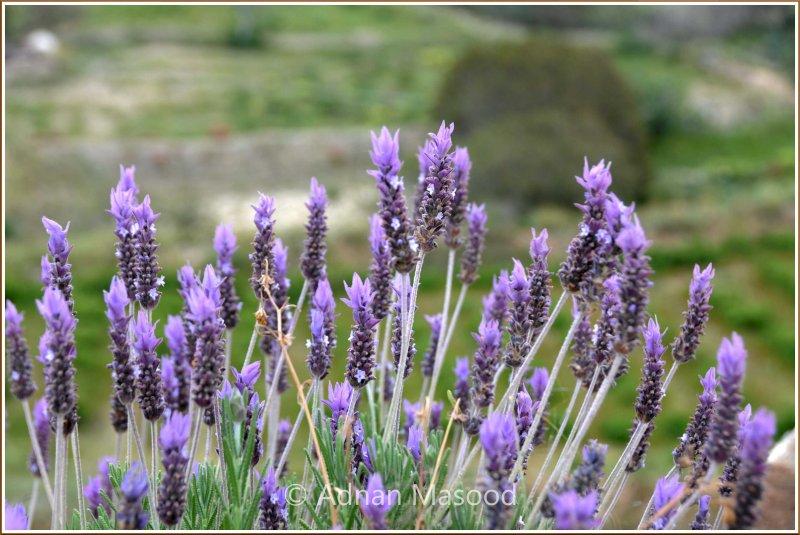 Spring_110407.jpg