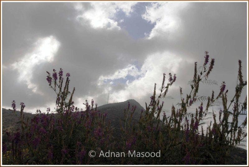WadiShafa_110404.jpg