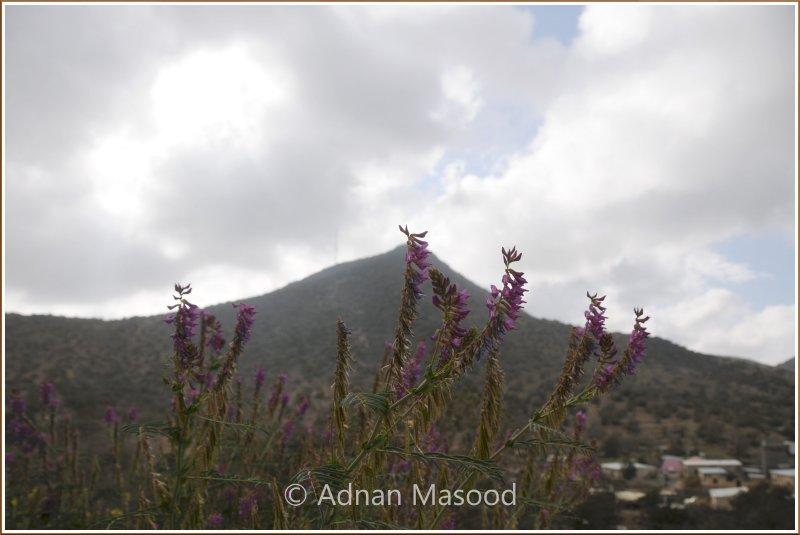 WadiShafa_110405.jpg