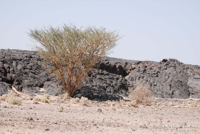 07-Lava Fields around crater.JPG