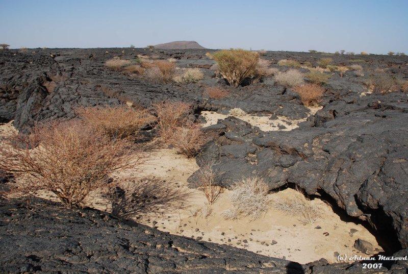 12-On Lava fields.JPG