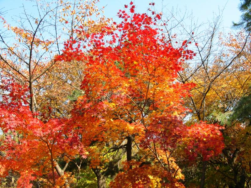 Fall in Seoul