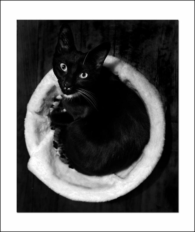 Chat noir en rond