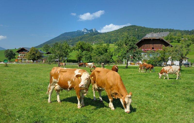 Austrian Pastoral