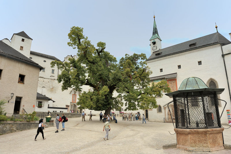 The Tree in Salzburg Castle