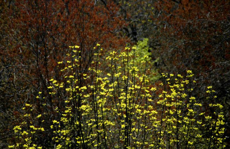 spring color 235