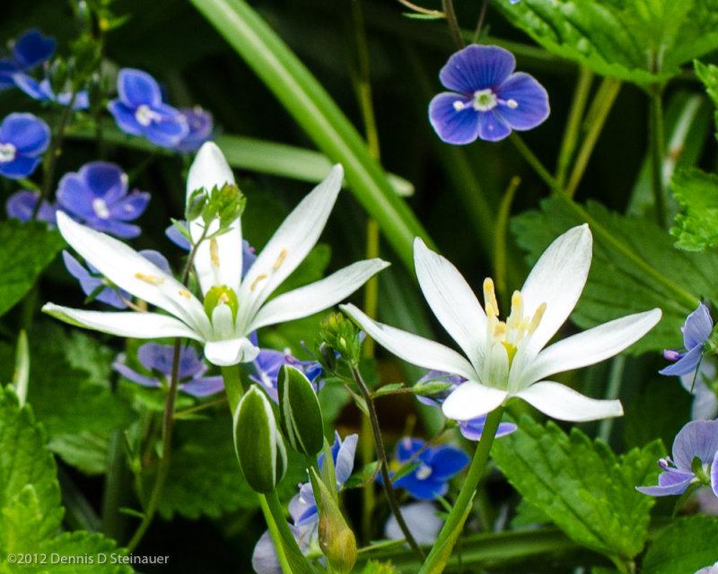 05/07/12 - Garden Visitors<br><font size=3>ds20120506-0208w.jpg</font>