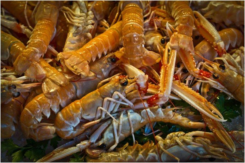 Shrimp at the Fish Market