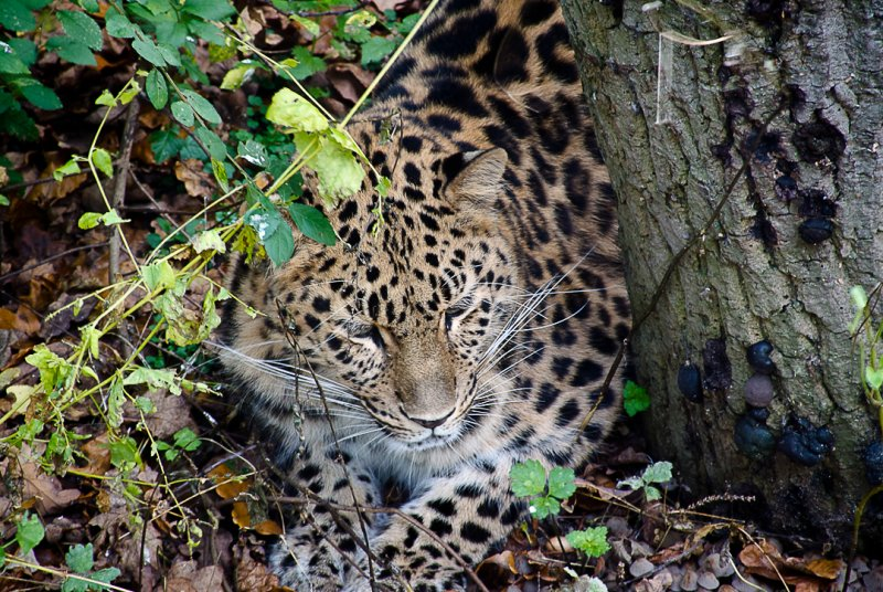 Through the looking glass - Marwell Wildlife