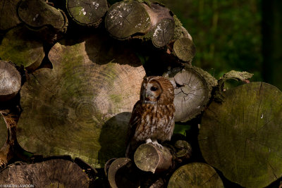 An OWL in the late afternoon sun.