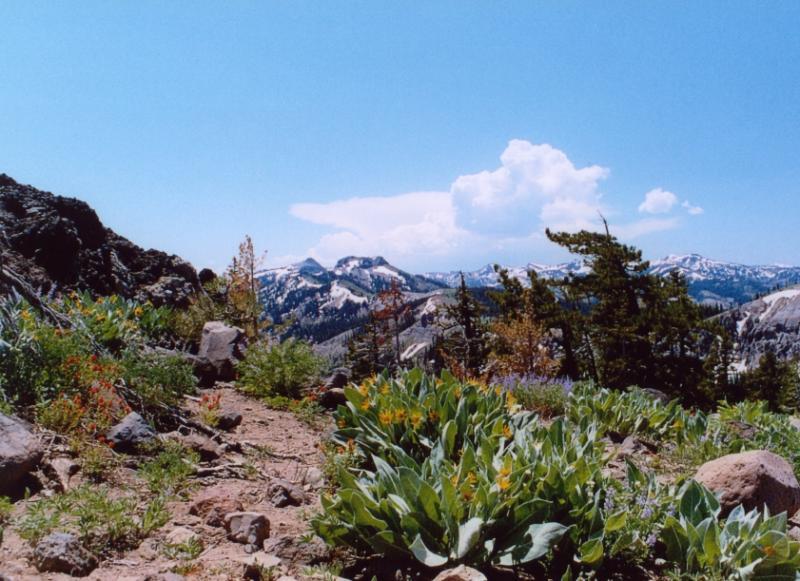 Mt Joshua