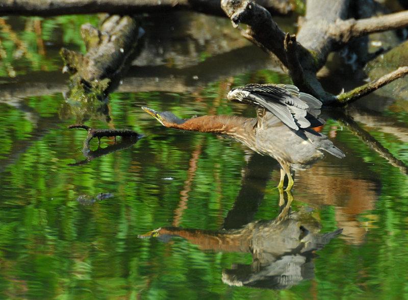 Same bird same log different day.jpg