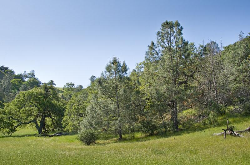 Gray-Pines-2.jpg