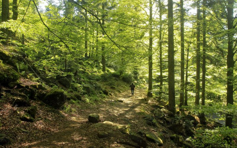 luminous spring forest