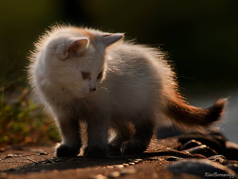 The Kitten of  Ethnic Cultural Park