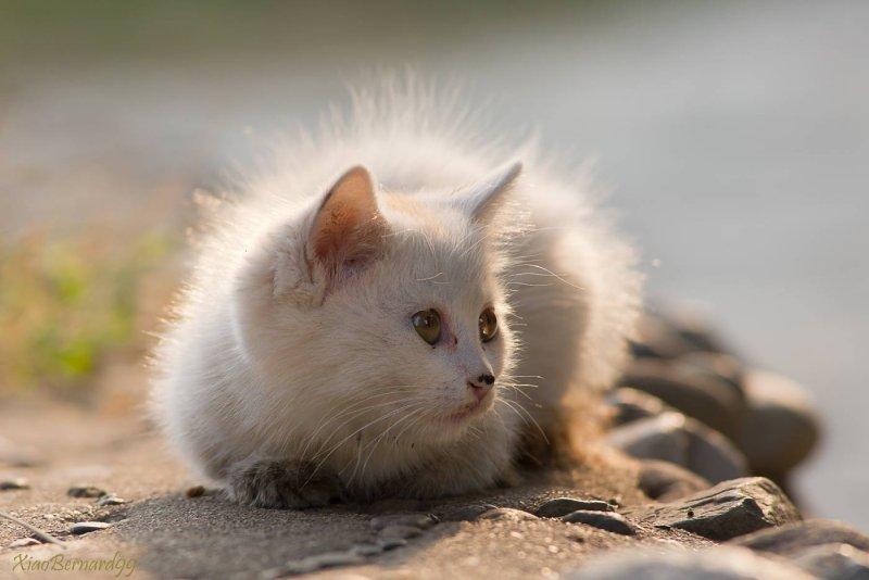 Kitten,Kitty...