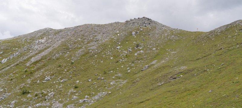 Habitat of Chamorchis alpina.