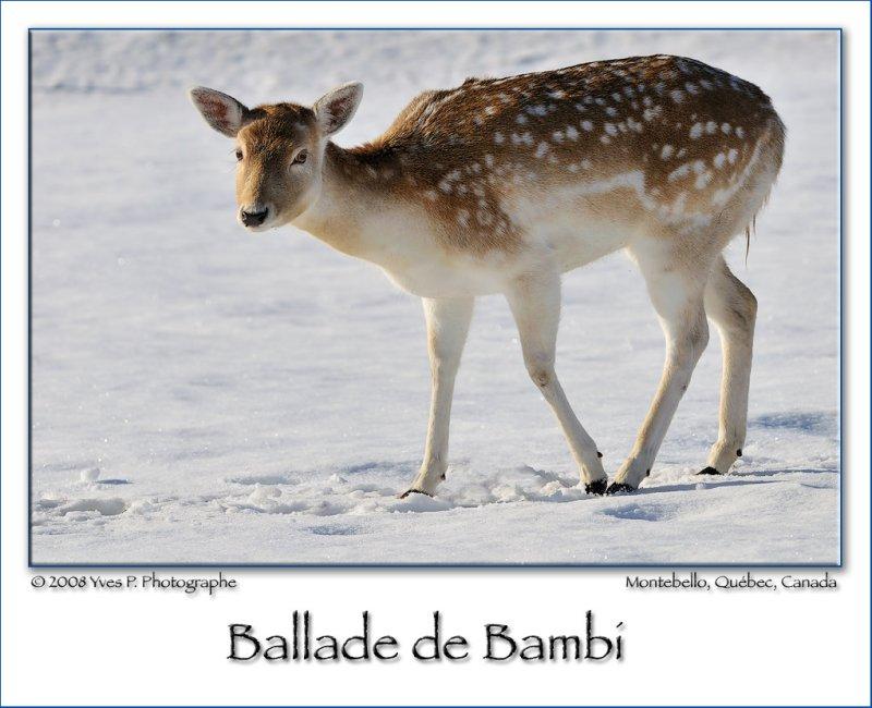 Bambis journey