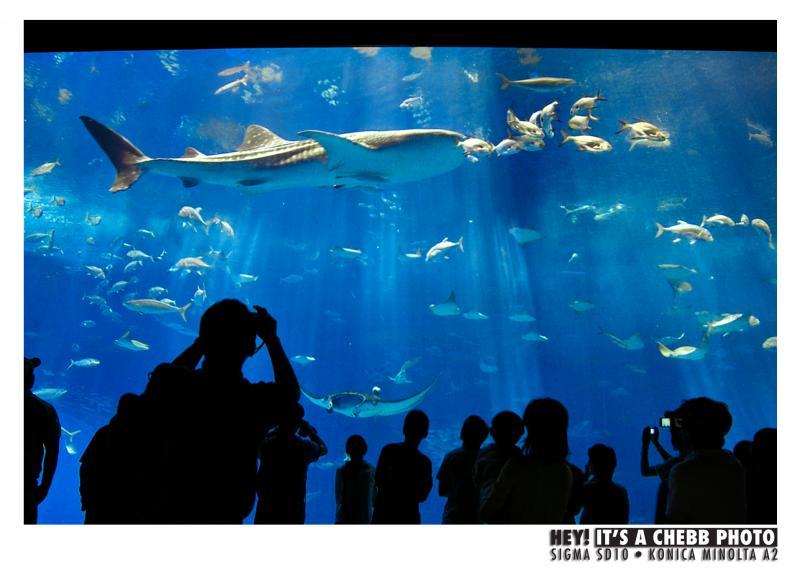 THE BIG FISHTANK.jpg