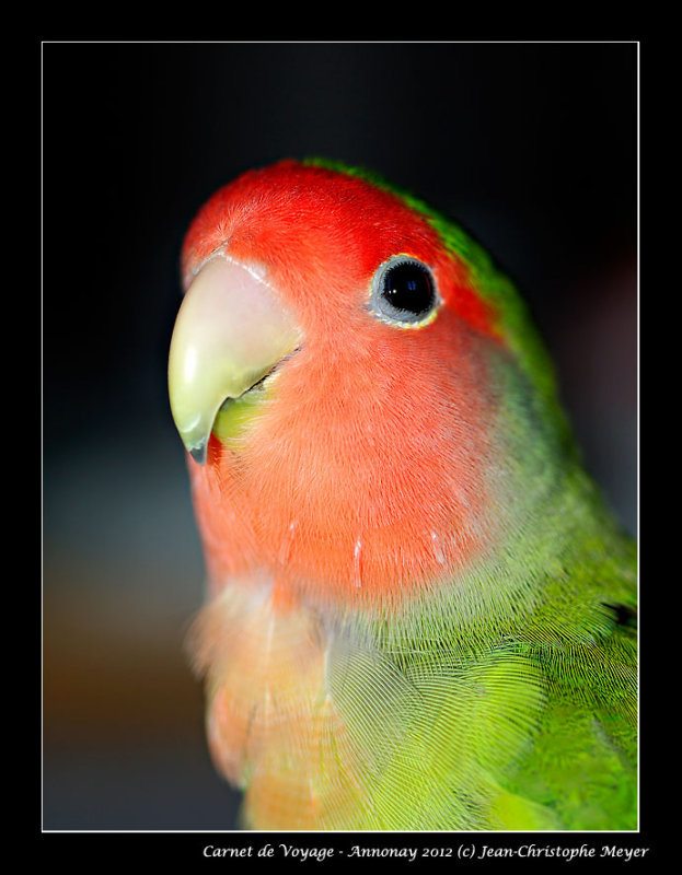 Hi mister Bird !