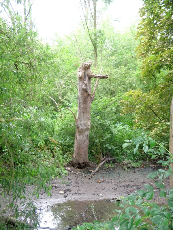 Stump in Old Richmond Deer Park.