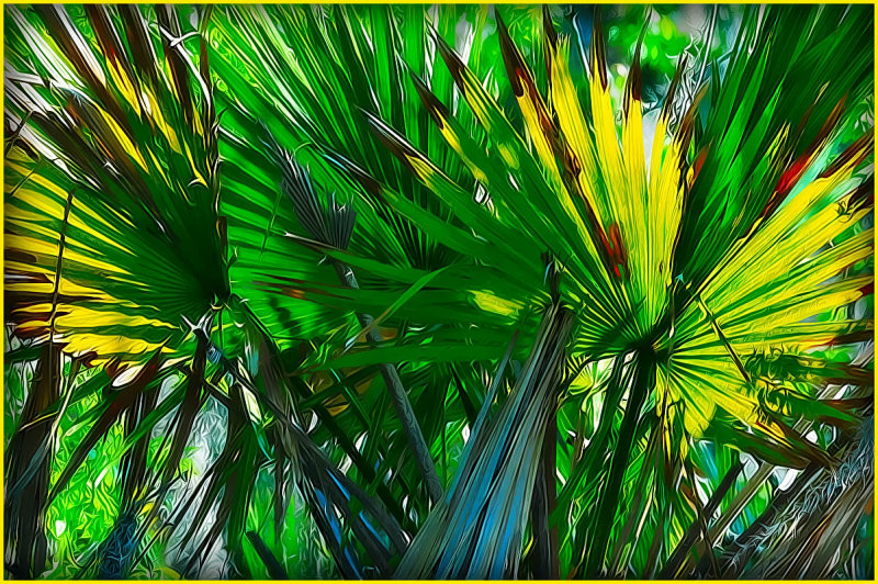 Palmetto Leaves