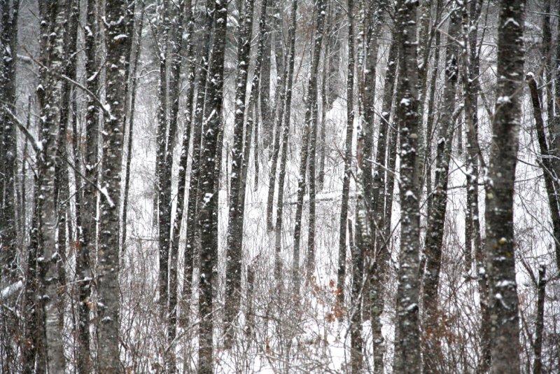 woods2209.JPG