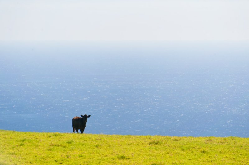a moo with a view