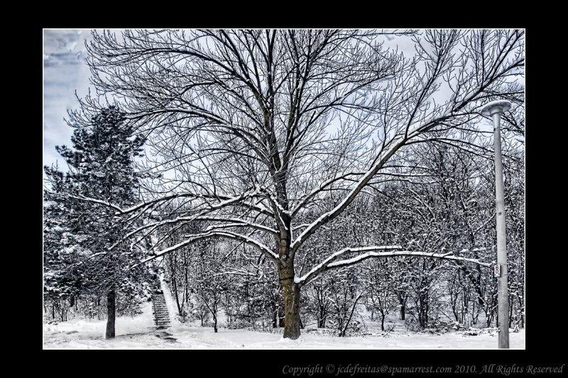2011 - Wilket Creek Park - Toronto