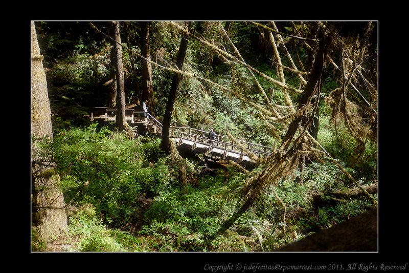 2011 - Vancouver Island - Pacific Rim National Park - Scooner Cove Trail - Ken