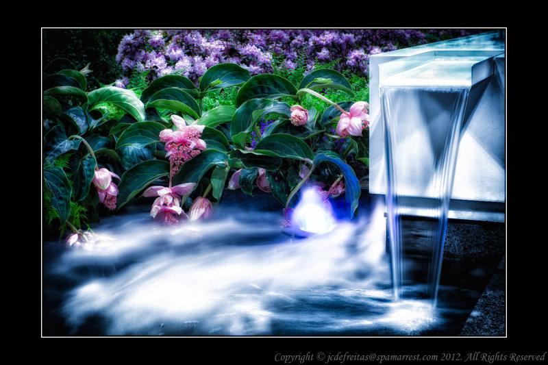2012 - International Garden of Tapei, Canada Blooms - Toronto