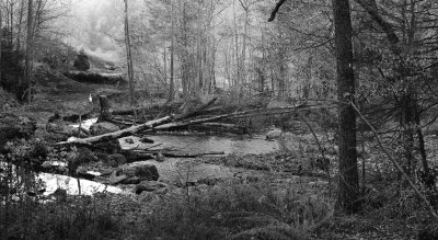 Revisit: The Woods in Tennessee