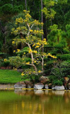 Morikami Japanese Gardens, Delray Beach, Florida
