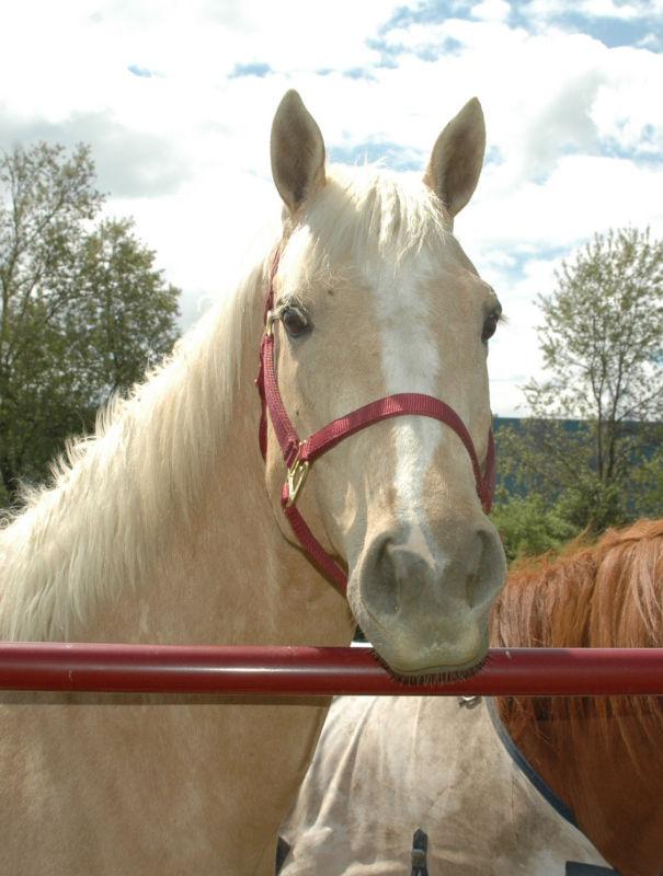 Lisas horse Romeo