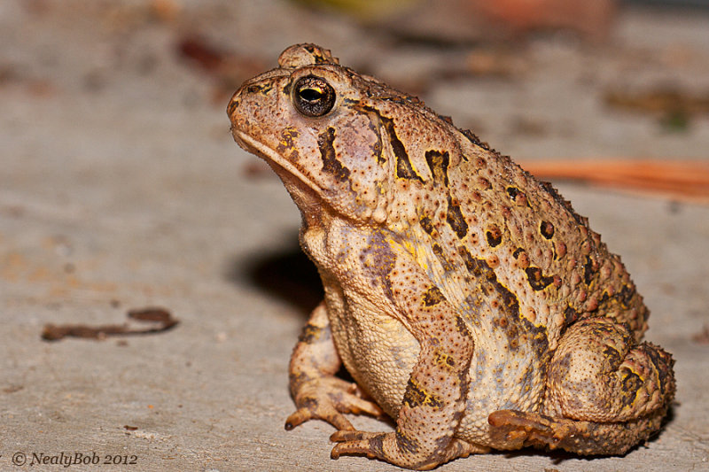 Toad August 5