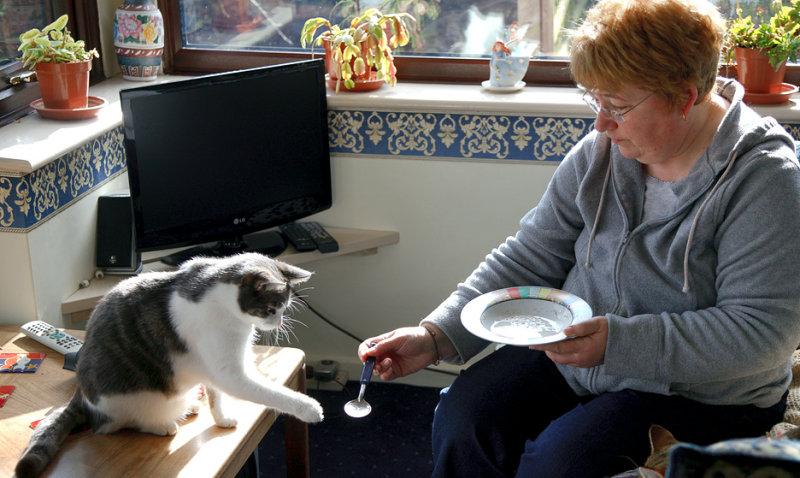 The Cat Wants His Milk:-)