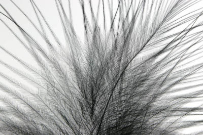 Marabou Feather.jpg
