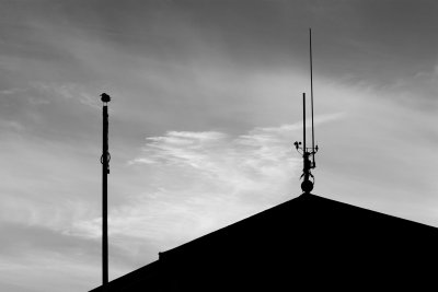 Bird on a Pole Mono