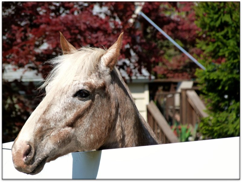 brookside horse.jpg