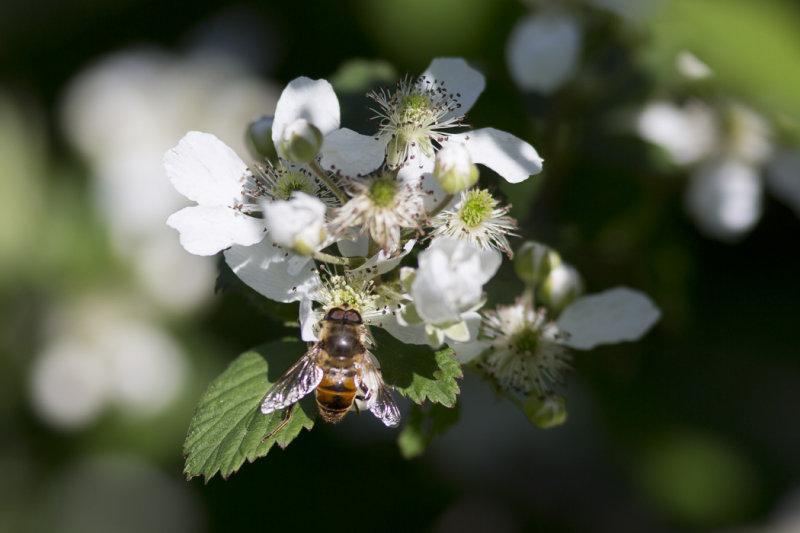 Bee1_test.jpg